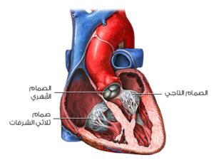 الصمامات في القلب