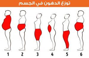 توزع الدهون في الجسم